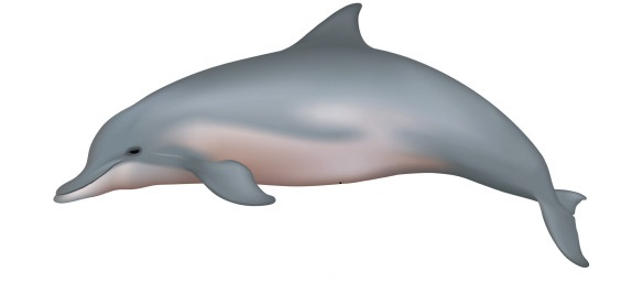 grey river dolphin