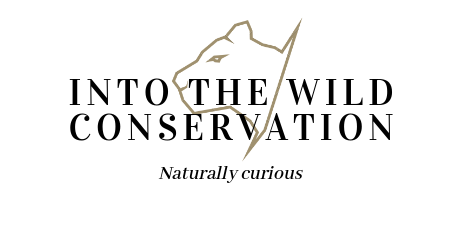Into the wild conservation