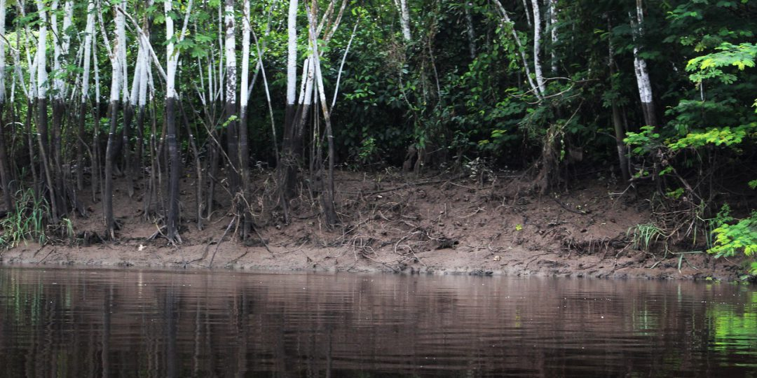 Samiria river amazon